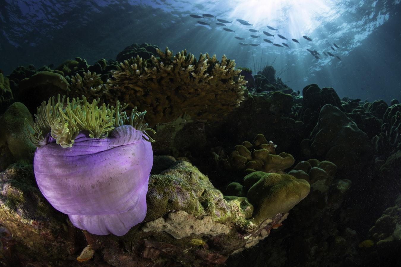Les conditions d'éclairage sous l'eau
