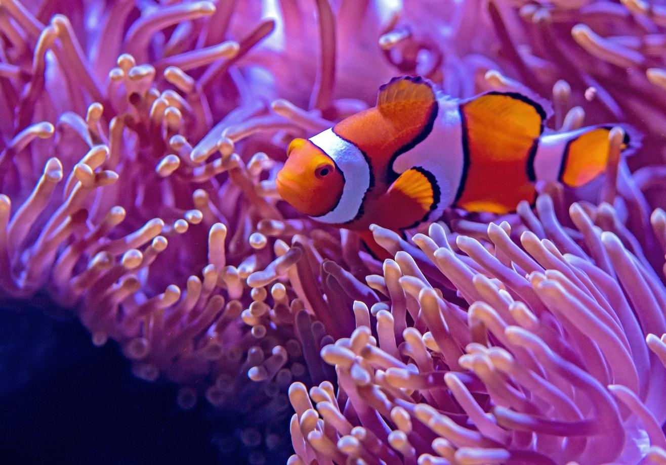 Verhalten unter Wasser